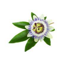 Stinking Flower